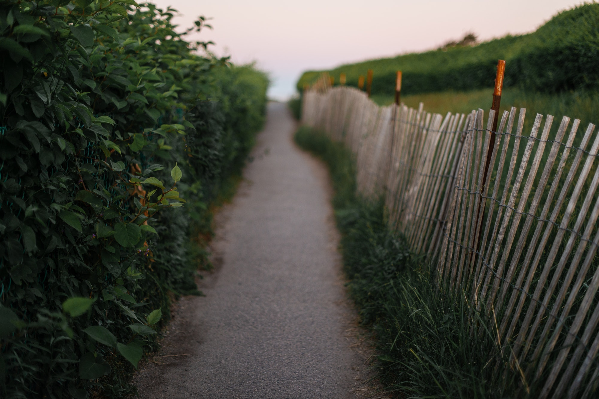 A beautiful hedged and fenced walkway on Ogunquit